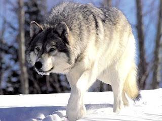 10 Fakta Unik Binatang Terjorok Di Dunia