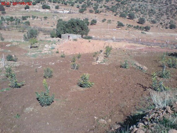 1ere anne de plantation-ADMER-