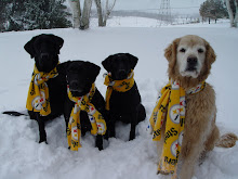 The Wilson Retriever Pack