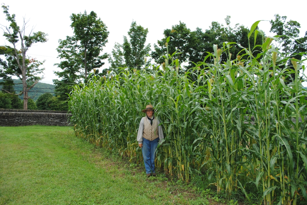 how to grow corn seed rust