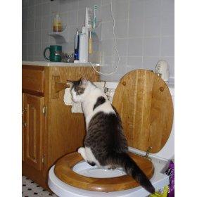 Cat Toilet Training