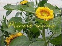 PREMIO MEME