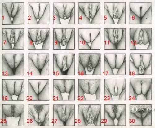Pussy Types