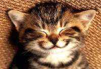 kitty smile image