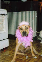 Big dog dressed as pink ballerina