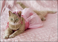 beautiful cat dressed in pink princess costume