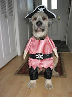 funny dog dressed as a sailor