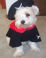 cutest dog dressed as a priate