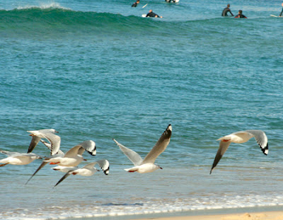 Bondi Beach 72