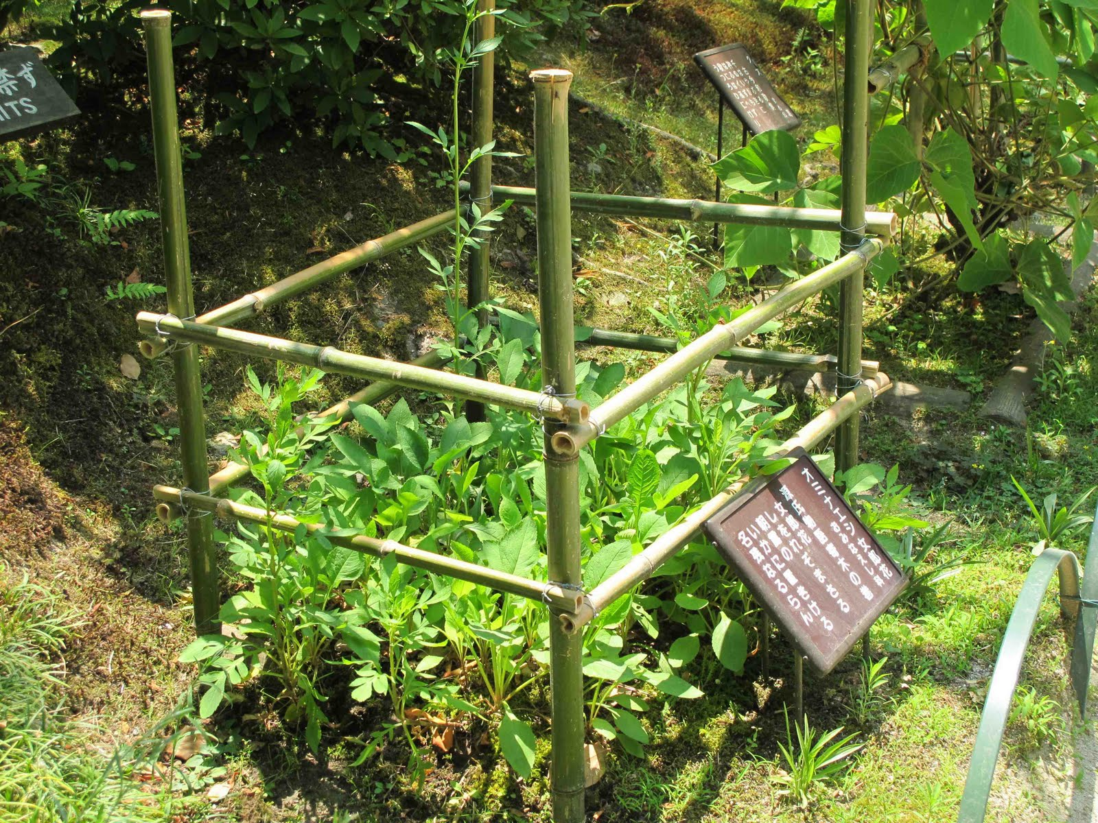 The Many Uses of Bamboo in the