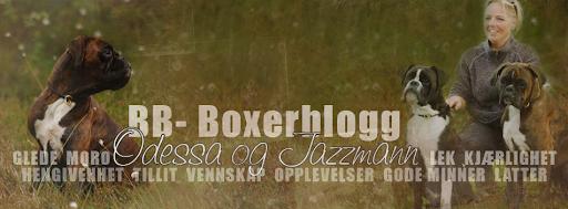 BB - BoxerBlogg
