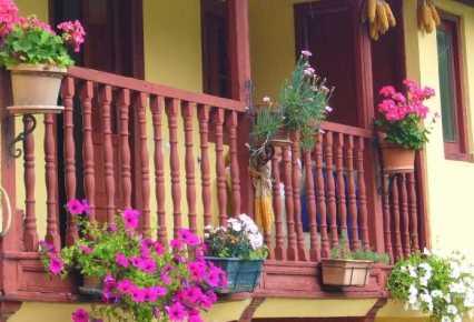 Jardiner a paisajismo plantas recomendadas para balcones for Plantas para balcones