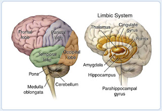 Gruesome opium the brain what parts of the brain are affected by opium ccuart Choice Image
