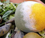 Penguraian Organik Pupuk Kompos