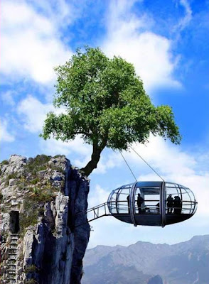 house hanging from a tree