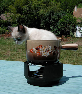cat inside a pot
