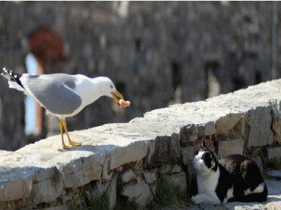 picture of a bird and cat