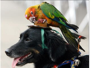 picture of dog and parrot