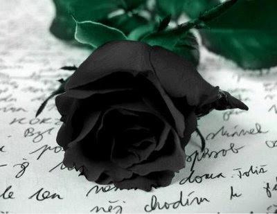 http://2.bp.blogspot.com/_w80cLIp4WxU/S1FZrLx2nHI/AAAAAAAAC6U/iXwfUf4cXT8/s400/Rosa18.jpg