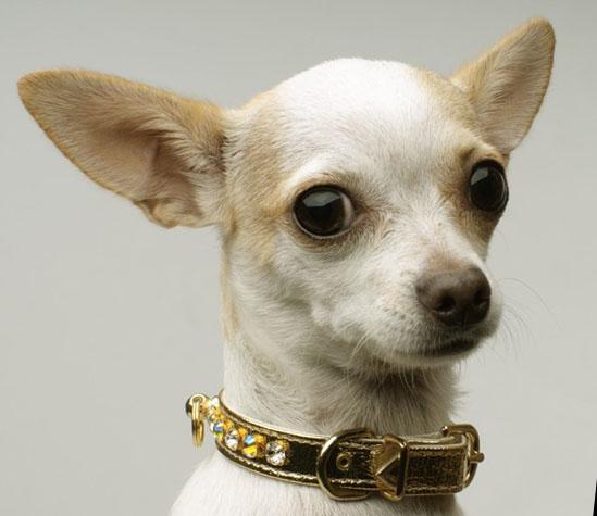 los perro mas pequenos: