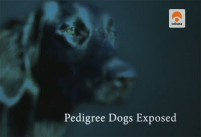 Perros de pedigree al descubierto [Documental | AVI | 560 MB]