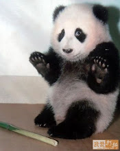 Panda cub
