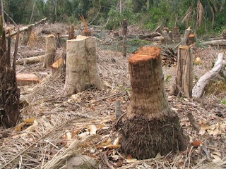 Deforestation Affecting Environment