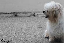 Bobby my dogy