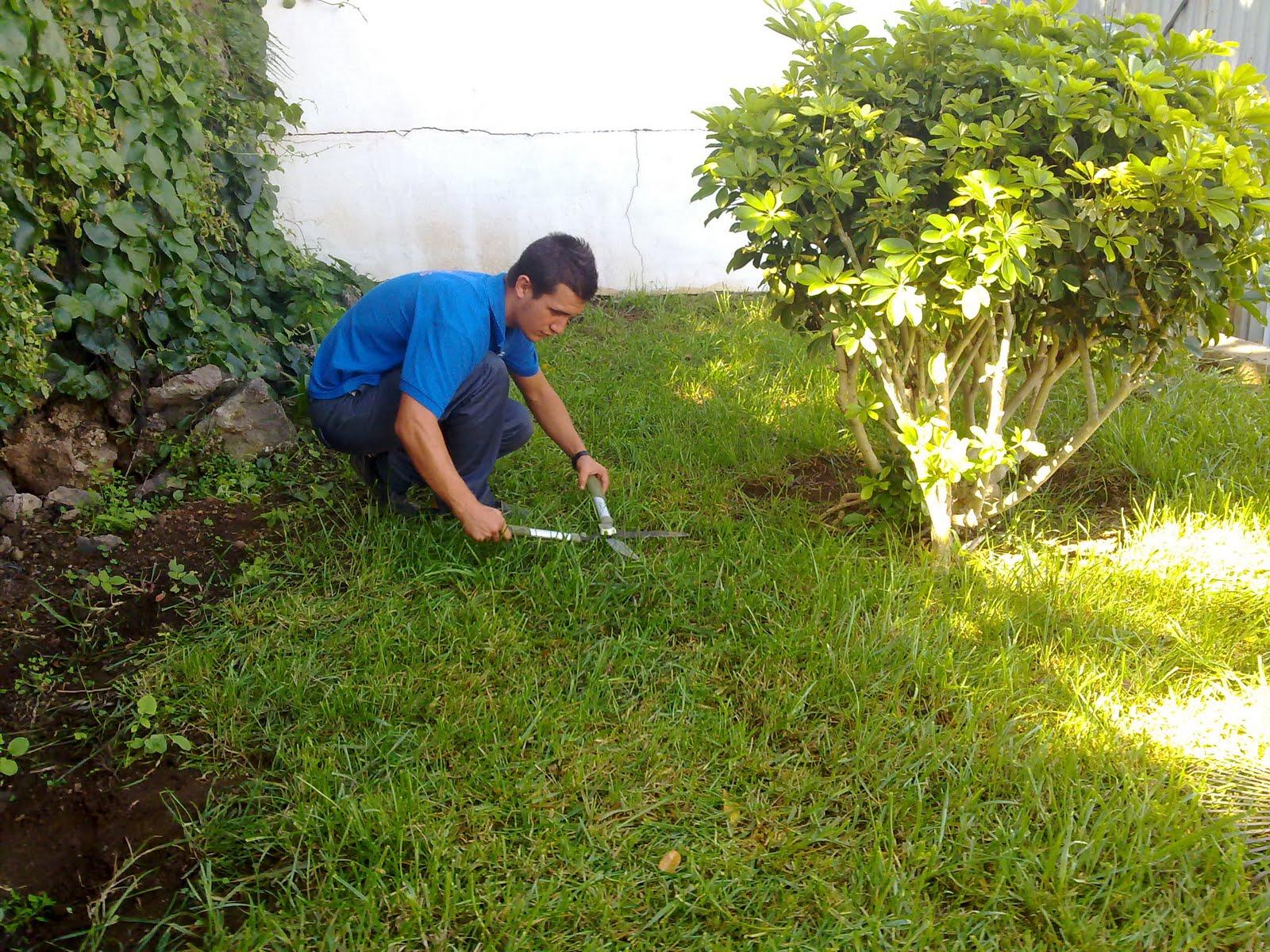 Curso auxiliar jardineria cort ndo c sped vivero for Auxiliar jardineria