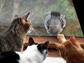 Cats and Pigeon