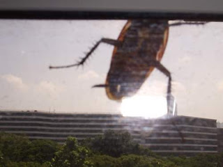 image of another fearsome, gigantic cockroach combing the outside of the building as the sun sets, looking for weaknesses to exploit in the coming attack