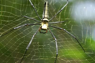 image of a big spider looking at the back side of it.
