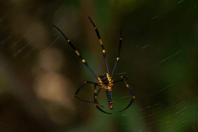 Image of the brightly coloured underside of a smaller spider