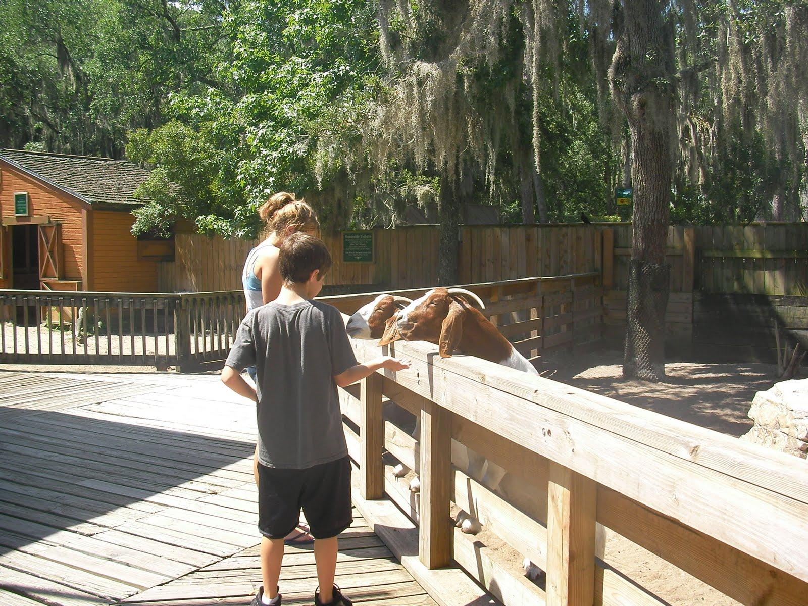 Zoo In Sanford Best Image Konpax 2018