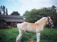 eindeliijk foto,s van de moeder van annika,,Winnie van de villenbraken als veulen.