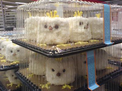 http://2.bp.blogspot.com/_wGr8njEWjtI/STmJZHFW4WI/AAAAAAAABNM/TmNlHT9AMeE/s400/Monique+R+owls%3F.jpg
