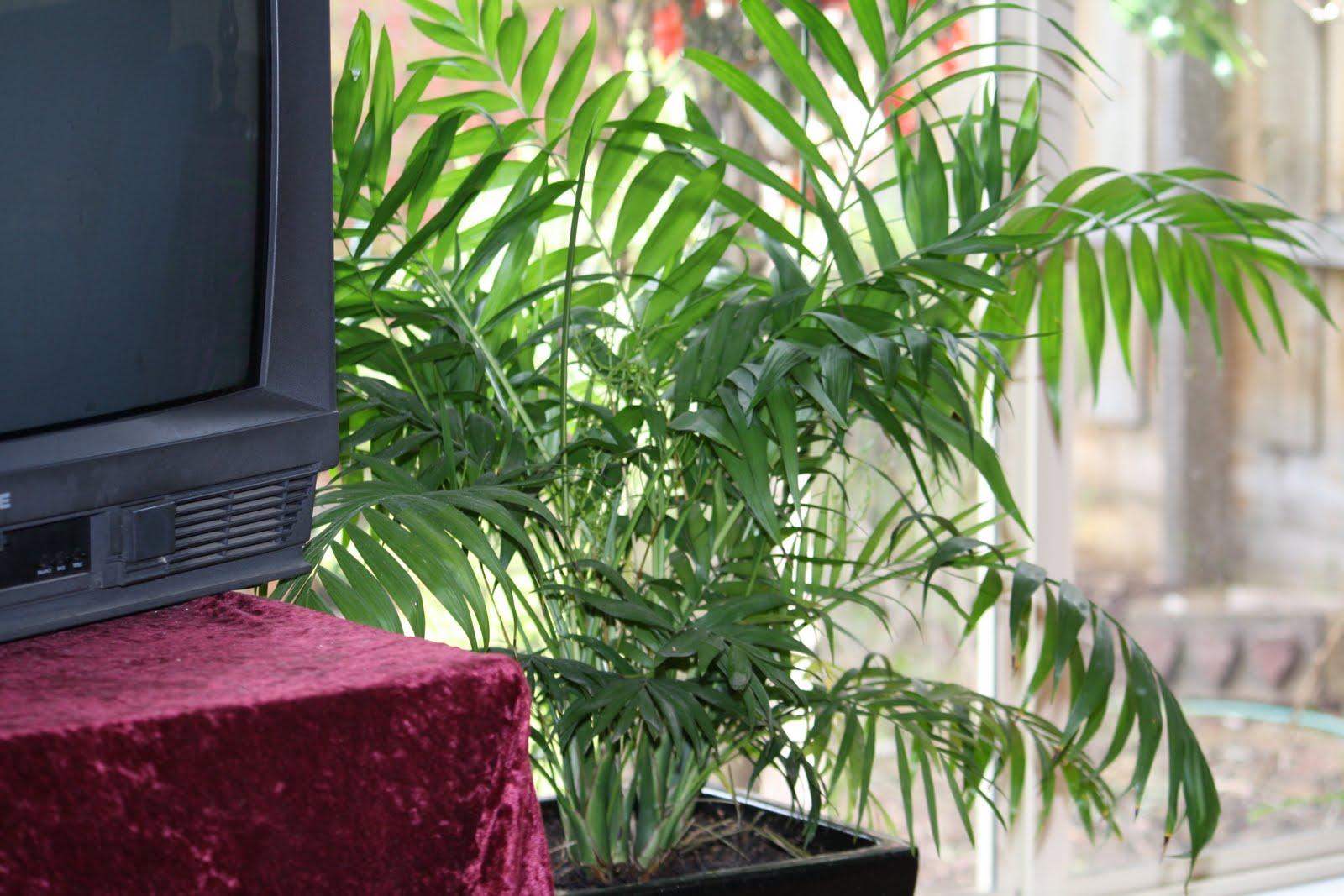 Http Veggiegobbler Blogspot Com 2010 09 Indoor Plants Not Just Aesthetics Html