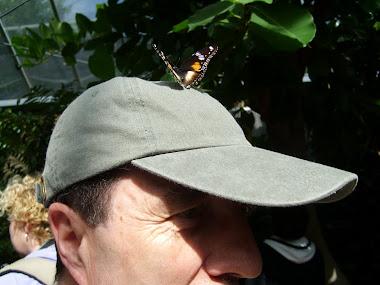 Mariposa amiga en la cabeza