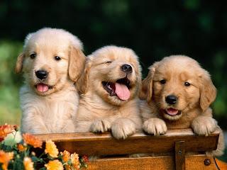 Fotos de cachorros2