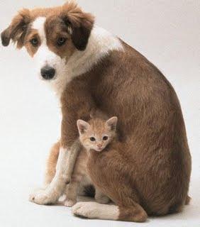 celebracion de la semana de la vida animal: