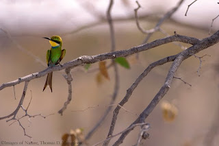 Free Birds Animals Wallpapers