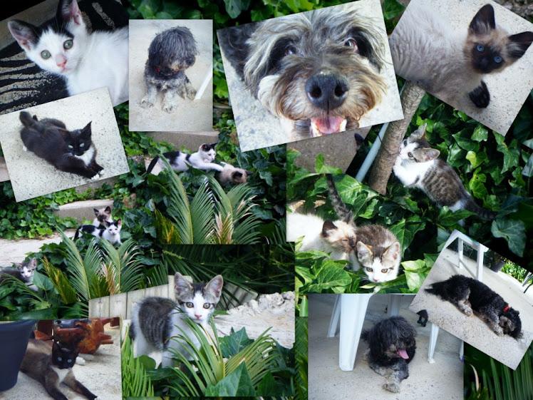 Un record del negret i els gatets