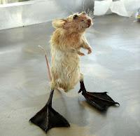 """Site ensina a criar o """"verdadeiro"""" mouse."""