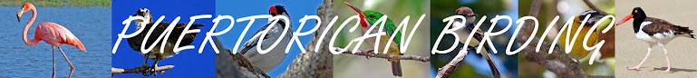 Puerto Rico Birding
