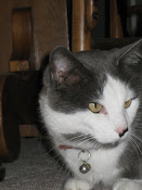 """""""Cats get the exact same look on their face whether they see a moth or an ax-murderer."""" ~Poundstone"""