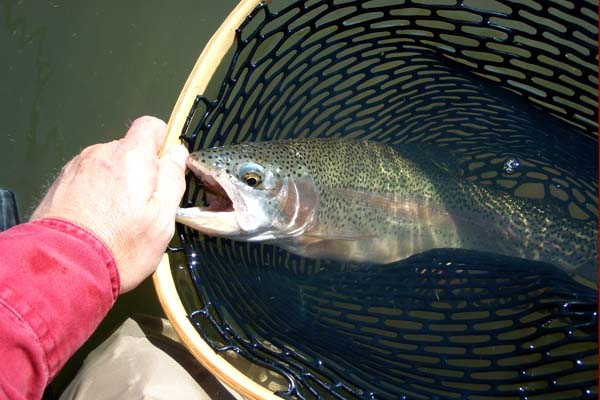 Fisherdad smith creek ranch lander county nevada for Trout farm fishing near me