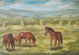Pasúce sa kone