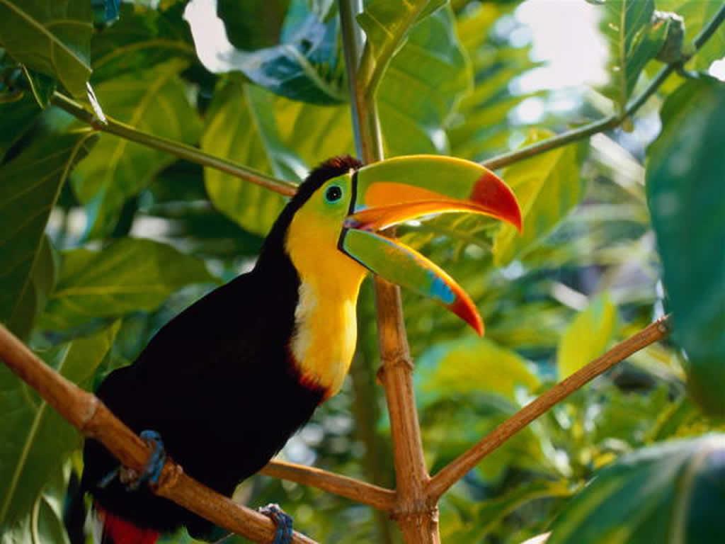 Burung adalah anggota kelompok hewan bertulang belakang (vertebrata