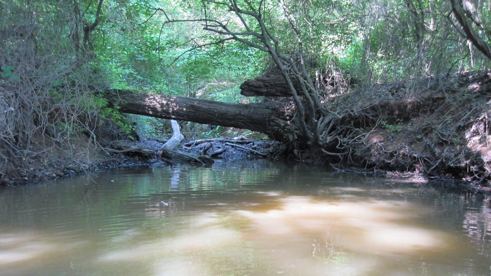 Durhamblogger  A Great Morning Paddling the Eno River