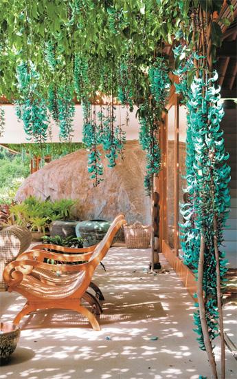 Todo dia é dia de jardinar Trepadeiras & Pergolados